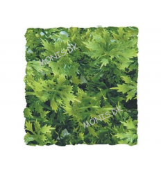 Natural Bush Australian Maple